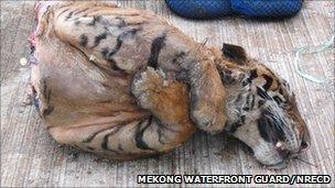 Half of a tiger (Image: Mekong Waterfront Guard and Natural Resources and Environmental Crime Suppression Division (Thailand))