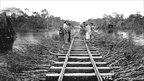 Workers laying tracks through the jungle - photograph by Dana B Merrill from archive of Museu Paulista, University of Sao Paulo