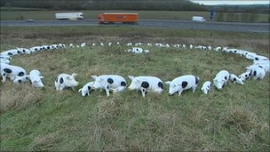The plastic pig circle in Warwickshire