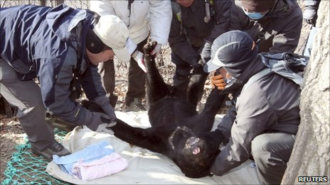 Officials with the rescued bear, Gwacheon , South Korea (15 Dec 2010)
