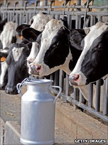generic cows