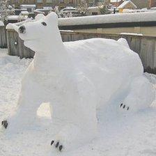 Snow polar bear in Builth Wells