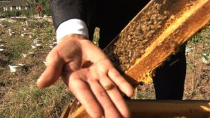 Mr Long, with his bees, does not have time to check his phone at the moment...