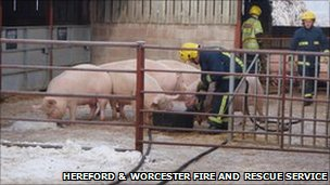 Firefighters refill drinking troughs for thirsty farm livestock