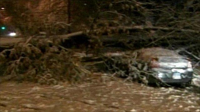 Tree fallen over car