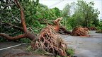 Uprooted trees near Townsville, Queensland. 3 February 2001