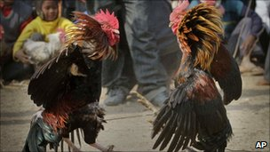 People watch a cockfight in Jagiroad, India (file image)