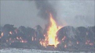Farm animals on a pyre