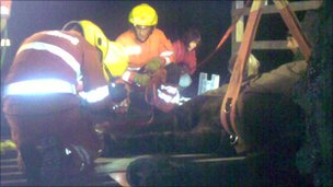 Fire crews rescue a stuck horse