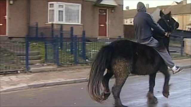 Horse on housing estate