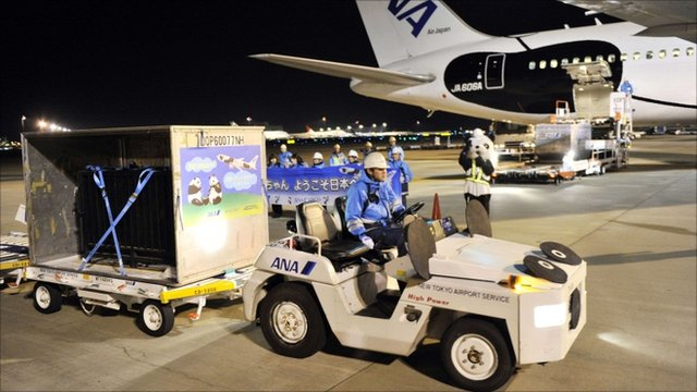 The pandas arriving in Japan