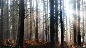 Sunrises through woods in Portsmouth