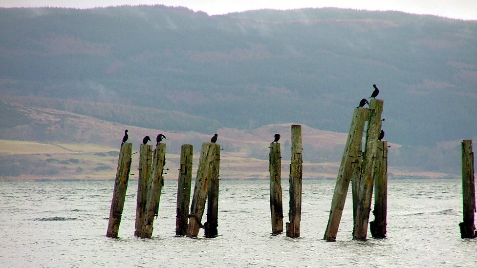 Birds perched on the remains of an old pier