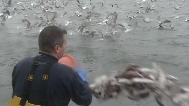 Fisherman throws away fish
