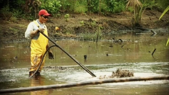 Cleaning up oil in the rainforest