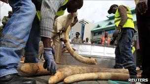 Kenyan customs workers arrange a shipment of elephant tusks , 6 May, 2011