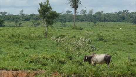 Brazil is one of the world's biggest agricultural producers - Photo by BBC News