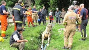 Firefighters look at a wooden horse stuck in a ditch on an animal rescue level 3 course