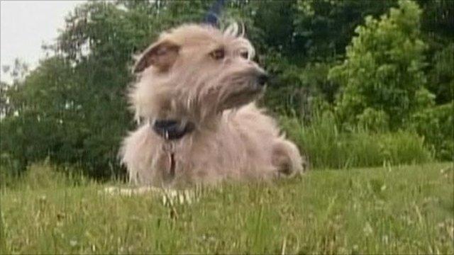 Mason the dog