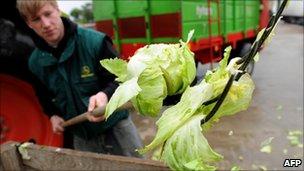 Farmer destroys lettuce in Ronneburg near Hanover