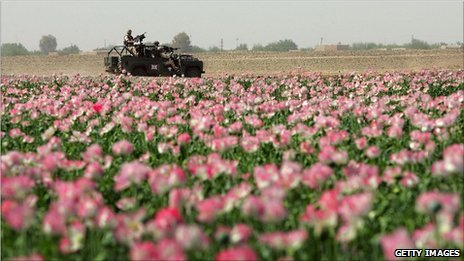 A tank drives past a field of poppies