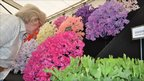 A woman smells sweetpeas at the Suffolk Show
