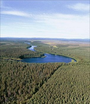 Forest, Finland (Image: BBC)