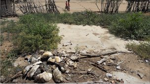 Tortoise shells are littered across towns in Madagascar (archive shot)