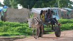 A donkey pulley a cart in Southern Sudan