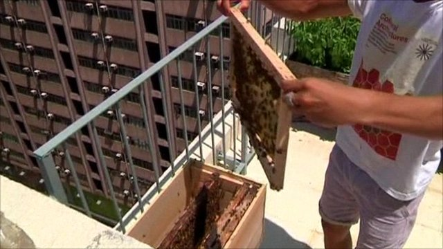 Hong Kong already has 11 beehives on rooftops