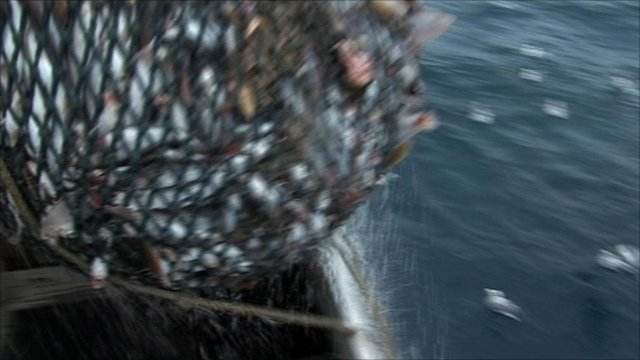 Fishing net being landed on a boat