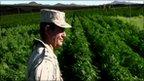post-image-Mexico finds huge marijuana farm in Baja California