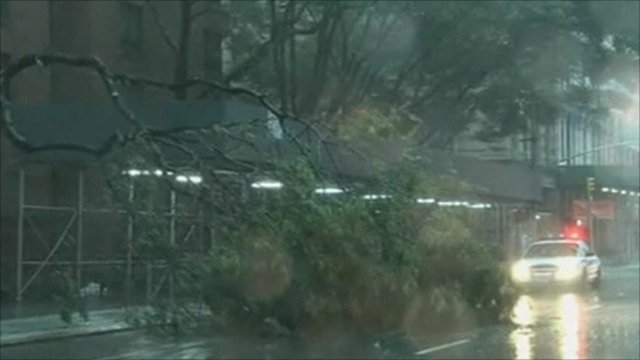 Fallen tree blocking the road