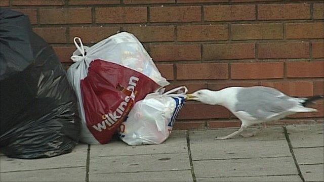 Seagull attacks rubbish bag