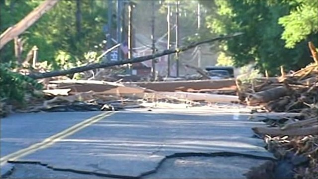 Storm damaged trees and road