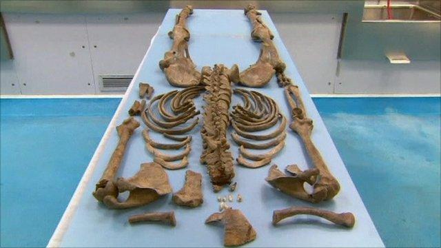 Bones of Ned Kelly