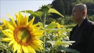 Zen Monk in field of sunflowers