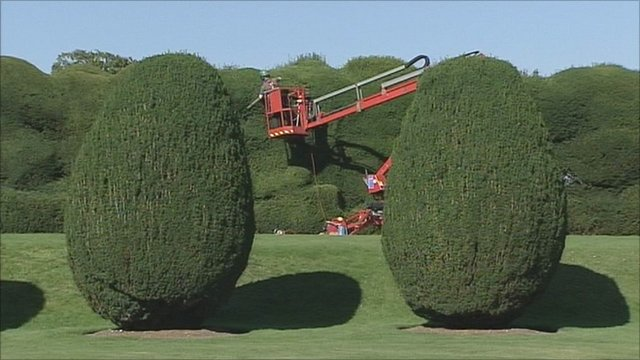 Hedge-cutting underway at Montacute House in Somerset