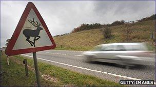 Beware of the deer sign