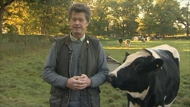 Gwyn Jones and cow
