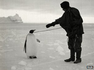 Emperor penguin on rope lead with member of Scott's team - photo from Royal Geographical Society collection