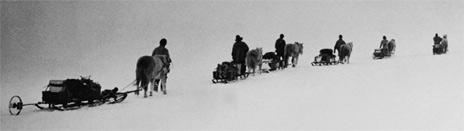 Scott's photo of the horse-drawn sledges he took to the South Pole. From David Wilson's book The Lost Photographs of Captain Scott (Little, Brown)