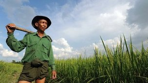 Myanmar farmer U Thein Hlaing, 62, poses for pictures in his paddy field on the outskirts of Yangon