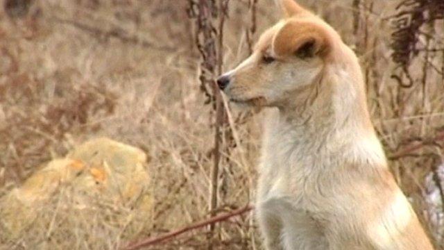 Dog in China mounts graveside vigil