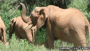 Elephants retreating