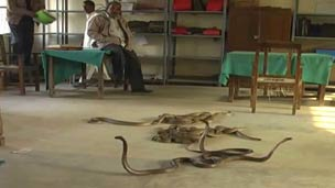 Snakes let loose in Indian office
