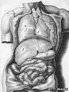 The organs of the male torso, showing the lungs, heart, liver, stomach and intestines (engraving by Michael van der Gucht circa 1688)