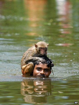 A monkey holds on to its keeper who wades through flood waters in Bangladesh