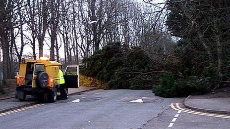 Tree down in Aberdeen