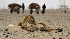 The remains of a dead animal photographed in Wajir, north-eastern Kenya